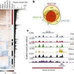 Mediator kinase inhibition further activates super-enhancer-associated genes in AML